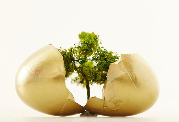 egg-cracking-opening-to-tree